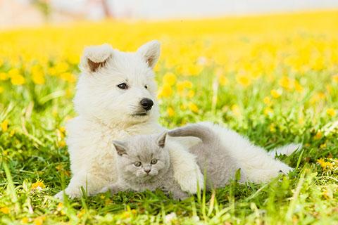 Cani e gatti nei B&B ed appartamenti