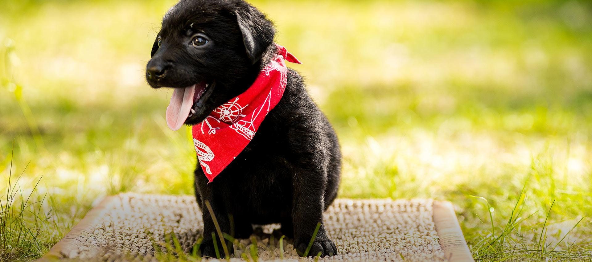 Cucciolo di cane benvenuto al B&B